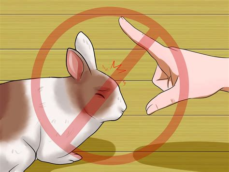 how to teach a not to jump how to teach your rabbit to jump something with pictures