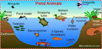 biomesduff freshwater ponds and lakes period 3