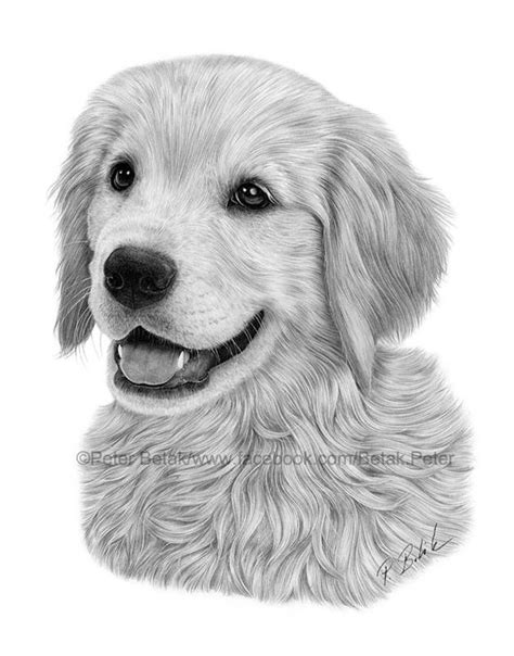 drawing of a golden retriever golden retriever drawing by petbet1 on deviantart