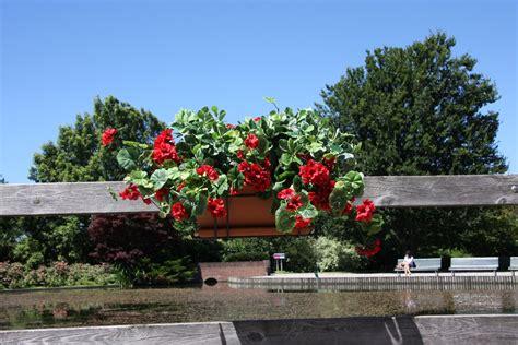 terrazzi fioriti balconi verdi e fioriti