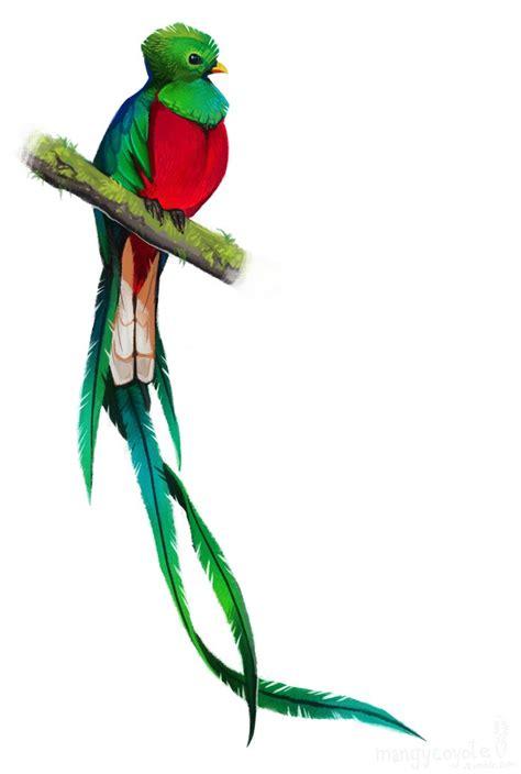 imagenes de tatuajes de quetzal resplendent quetzal by coyotemange on deviantart
