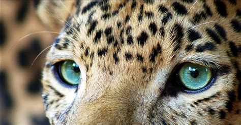 s leopard we makeup leopard an inspiration
