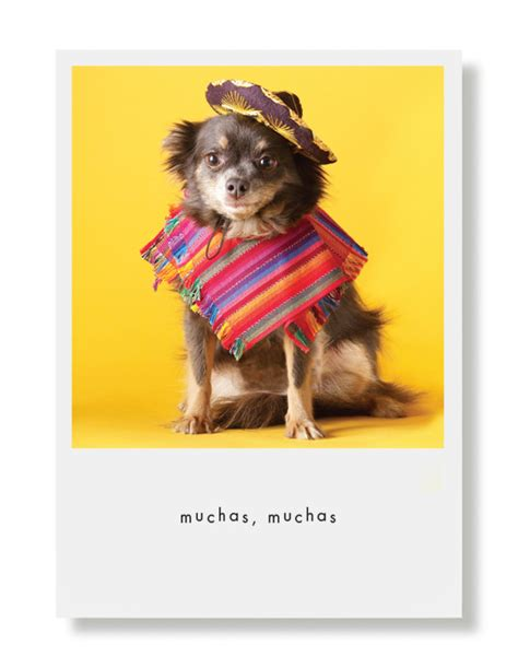 maggie the inner musings of a chihuahua a memoir books maggie quot muchas gracias quot greeting card hooray for the underdog