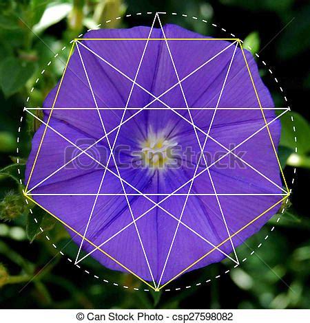 figuras geometricas naturales pel 237 culas de geometr 237 a patrones flor naturaleza