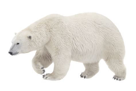Bear Decorations For Home by Follow Your Joy First Know What You Want