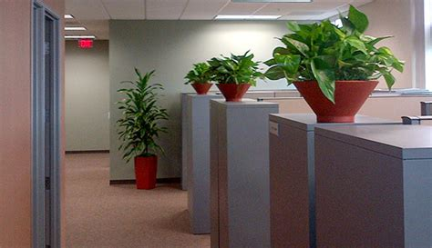 Office Plants by Benefits Of Indoor Plants In Offices Playa Del Carmen