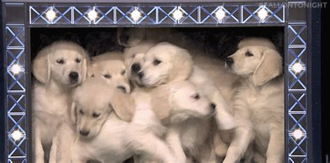 puppies gif puppy predictors gifs find on giphy