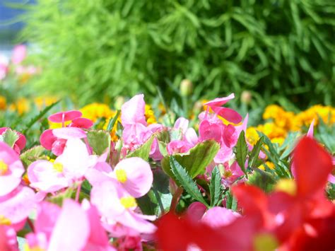 sfondi desktop gratis fiori primavera sfondi desktop primavera gratis natura e paesaggio con
