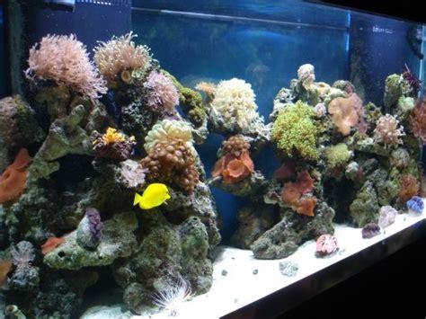 aquarium design kolkata saltwater aquarium online guide complete online resource