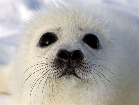 white seal pup things that put a on my