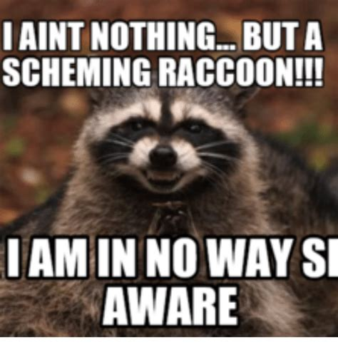 Raccoon Memes - 25 best memes about scheming raccoon scheming raccoon memes