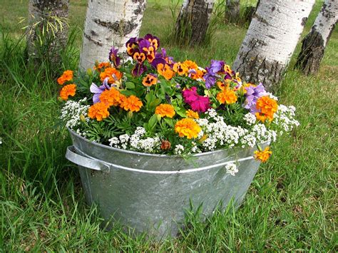 free photo flowers pot grow colorful free image on