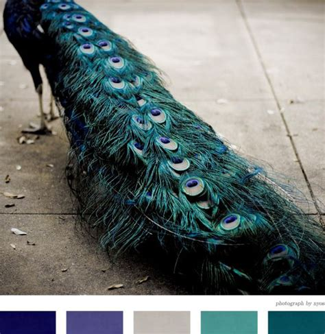 creature comforts definition 25 best ideas about peacock colors on pinterest photos