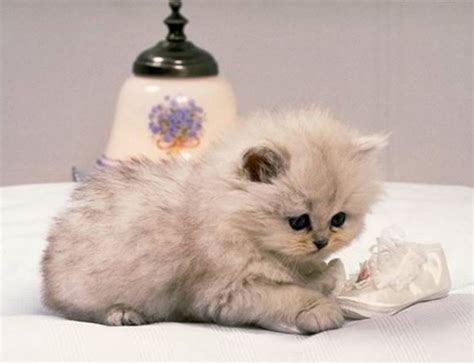 imagenes tiernas gatitos bebes imagenes de gatitos tiernos beb 233 s y lindos imagui