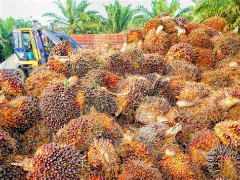 Jual Minyak Kelapa Sawit harga jual sawit turun drastis jelang lebaran