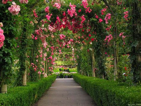 flower yard wallpaper rose garden wallpapers wallpaper cave