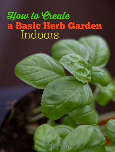 herb garden basics using spice grinders for delicious and healthy cooking