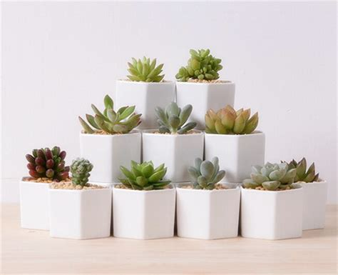 Cute Plants by Great Idea For Small Plants Cute White Ceramic Vases