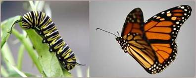caterpillar turning into butterfly quotes quotesgram
