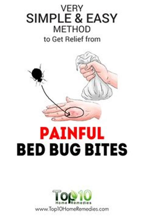 how easy is it to get bed bugs 10 myths about bed bugs the secret the o jays and beds