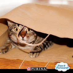Pure Love For Pets Sweepstakes - 1000 images about national pet month on pinterest gift bags pets and photos