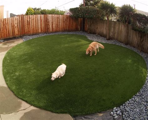 backyards for dogs artificial turf for a dog run area installed in a kidney shape in a backyard in san