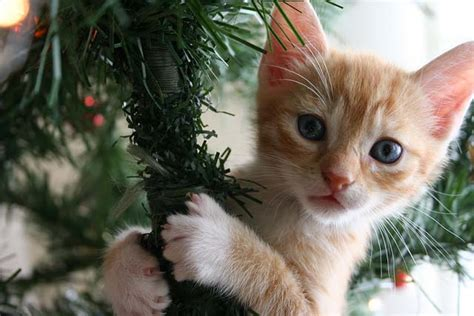 christmas decorations 101 keeping your pet safe