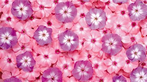 Vs Pink Flower pink and purple flower backgrounds wallpaper cave