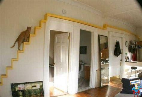 gatti in casa percorso per gatti in casa foto di superedo it