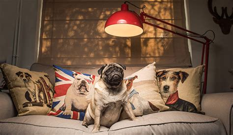 shoo for pugs home pug puffin unique gift shop for you and your