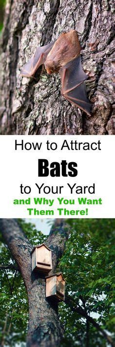 best 25 bat box ideas on pinterest