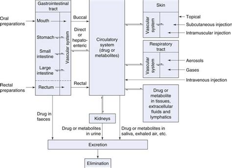 design dosage form mechanisms of absorption related keywords mechanisms of
