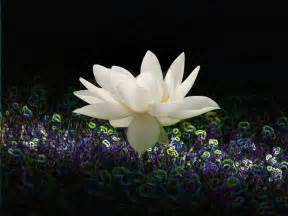 Lotus Animation Animated Flower Water Reflections Gif Lotus Stab