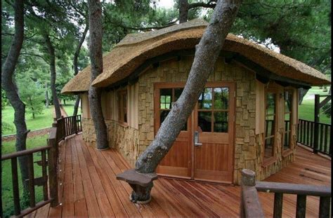 nice tree houses nice full size tree house at the house pinterest