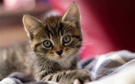 Süße Baby Tiere 5015 by Die 71 Besten Katzen Hintergrundbilder