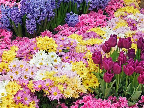 wallpaper bunga download toko bunga florist di jakarta murah cantik dan berkesan