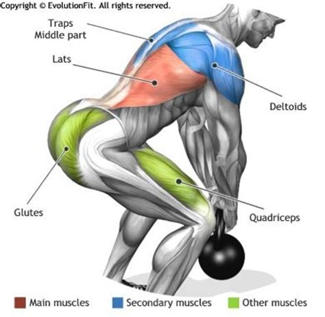 what muscles do kettlebell swings work 17 best ideas about dead lifts on pinterest squats