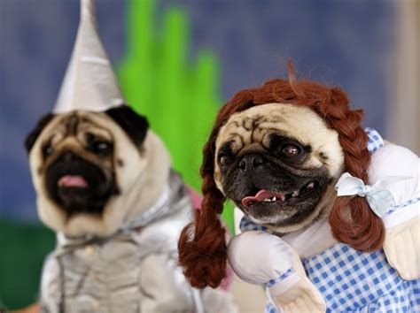 pug costume for dogs 15 costumes inspired by the flavorwire