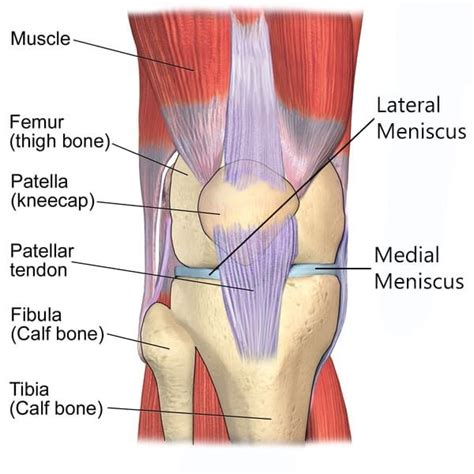 10 Common Preventable Workout Injuries by 436 Best Strength Injury Prevention Rehab Images