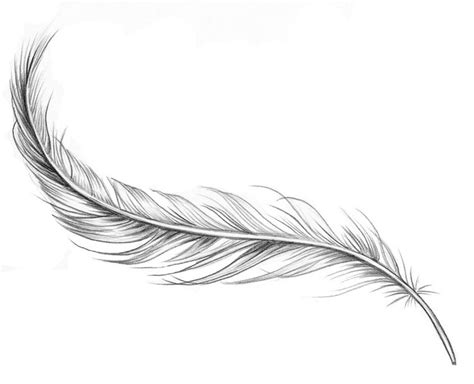 simple feather tattoo designs the world s catalog of ideas