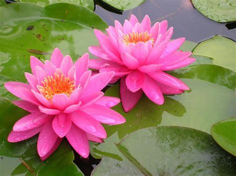 fior di loto cocktail flora lago di comabbio