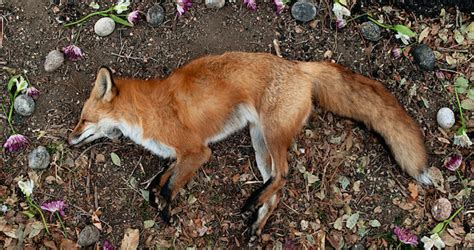 imagenes animales muertos fot 243 grafa venera con altares de flores a animales muertos
