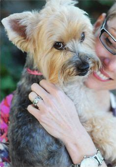 yorkie cancer eli the terrier mix pictures 940416 and friends more best