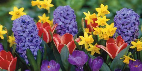 nomi di fiori primaverili nomi e immagini di fiori di primavera 30 foto