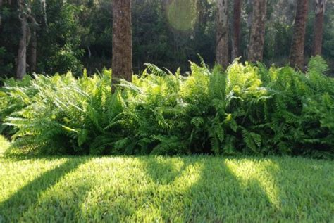 make it green add ferns for a hearty lush landscape