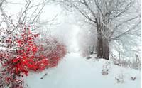 Beautiful Winter Scenes With Animals 1024 &183 768