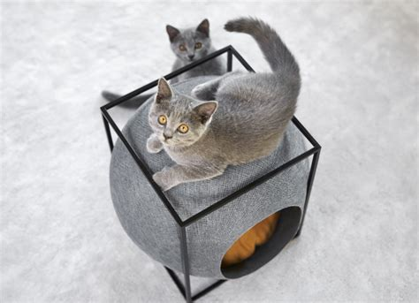 cat modern furniture cat cocoons cozy feline furniture fits into modern homes