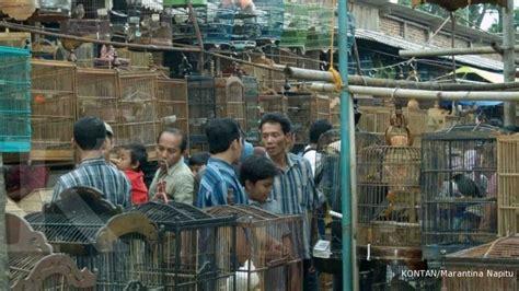 Lu Hias Jawa sentra burung ambarawa tersedia burung langka 2