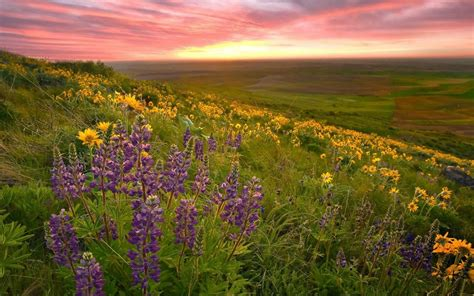 flower valley 1280 800 wallpaper valley of flowers wallpaper nature and landscape