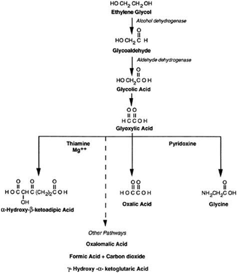 Detoxing From Pg Propylene Glycol by Study 14 Ethylene Propylene Glycol Toxicity
